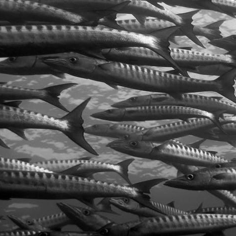 Fisheries, Aquaculture & Maritime